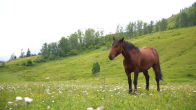 Countryside, green, horses stock video footage