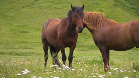 Countryside, green, horses stock video
