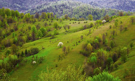 Countryside green meadows landscape Royalty Free Stock Photo