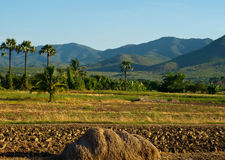 Countryside. Ground preparation, planting rice Thailand with mountains behind Stock Photo