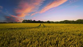 Countryside, Harvest, Agriculture Royalty Free Stock Photos