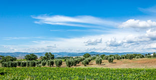 Countryside in the hills of Tuscany Royalty Free Stock Photo