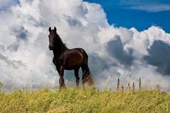 Countryside with a horse on dike against clouds Royalty Free Stock Images