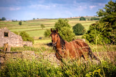 Countryside Horse stock images