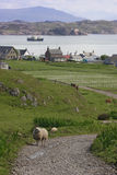 Countryside in Iona. stock photography