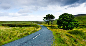 Countryside in Ireland. Empty, narrow road in Wicklow, Ireland Royalty Free Stock Image