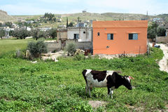 Countryside of Jordan. Rural areas, in the Jordan Valley, Middle East royalty free stock photo