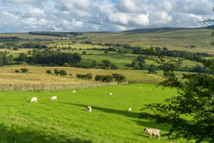 Countryside of the Lake District Stock Photography