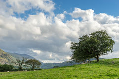 Countryside of the Lake District Royalty Free Stock Image