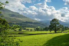 Countryside of the Lake District Royalty Free Stock Photo