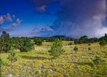 Countryside landscape. Trees in countryside with cloudscape in background Stock Photography