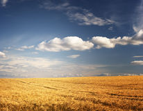 Countryside landscape Stock Images