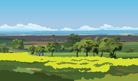 Countryside landscape. Green fields and trees under the blue sky Royalty Free Stock Image