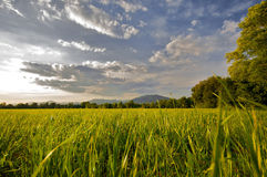 Countryside landscape Royalty Free Stock Photography