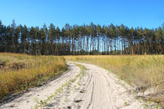 Countryside landscape. Sandy road to the pine forest Stock Image