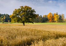 Countryside landscape in autumn Stock Images