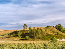 Countryside landscape. With birch trees growing on hillock Royalty Free Stock Photo