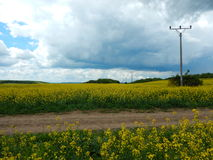 Countryside landscape with canola oil field Stock Images