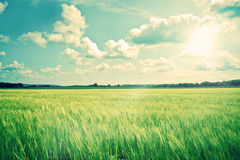 Countryside landscape with crops and sunshine Royalty Free Stock Image