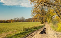 Countryside landscape with a dog sitting on dirty road. Autumn season in countryside of Vidzeme - ecologically cleanest region in Latvia and Europe Stock Photos