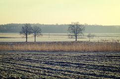 Countryside landscape in early morning. Field and trees with frostiness, Poland Stock Image
