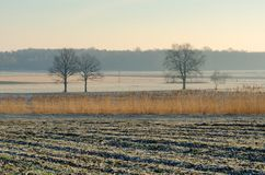 Countryside landscape in early morning. Field and trees with frostiness, Poland Royalty Free Stock Image