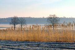 Countryside landscape in early morning. Field and trees with frostiness, Poland Stock Photos