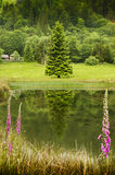 Countryside landscape with flowering meadows,pond and forest in background, UK, Europe Royalty Free Stock Image
