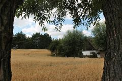 Countryside landscape - golden fields stock photography