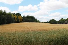 Countryside landscape - golden fields royalty free stock images