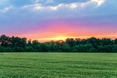 Countryside landscape with green ripening ears of wheat field under cloudy sky at sunset. Agricultural natural plantation with sundown glow Stock Photography