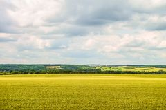 Countryside landscape with a green young wheat field under a cloudy sky. Cereal field and hills with forest on the horizon. Typical relief of the Belgorod Royalty Free Stock Images