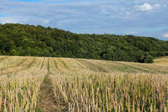 Countryside landscape after harvest Royalty Free Stock Photo