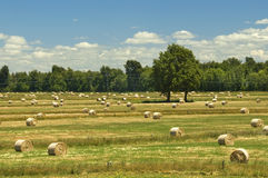 Countryside landscape with hay bales Royalty Free Stock Photos