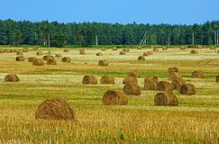 Countryside landscape with haystacks royalty free stock photography