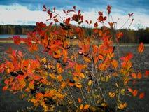 Countryside landscape. At Jyvaskyla, Finland Stock Image