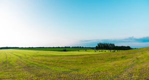 Countryside landscape panorama Royalty Free Stock Images