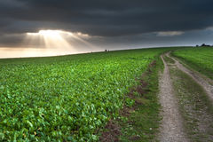 Countryside landscape path leading through fields Stock Photo