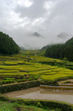 Countryside landscape of rice paddy terraces going up the hill Stock Photos