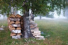 Fog meadow / field on summer. Birch trees in the mist. Countryside landscape summer field. Stack of wood in fog. Foggy mist evening. Meadow in the fog. Fog on royalty free stock images