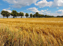 Countryside landscape. During summer time Royalty Free Stock Photo
