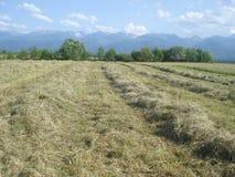 Countryside landscape in Transylvania, Romania Stock Photo
