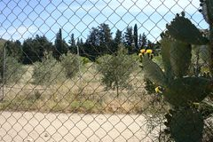 Countryside landscape with trees and flowers. Plant of fig of india with thorns a yellow flowers behind a metallic grid and some olives trees in the background stock photography