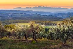 Countryside landscape, Vineyard in Chianti region at sunset. Tuscany. Italy stock photo