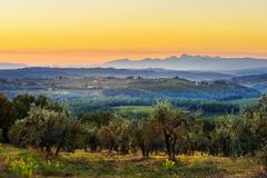 Countryside landscape, Vineyard in Chianti region at sunset. Tuscany. Italy royalty free stock images