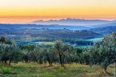 Countryside landscape, Vineyard in Chianti region at sunset. Tuscany. Italy. Countryside landscape, Vineyard in Chianti region in Tuscany at sunsen. Italy royalty free stock photos