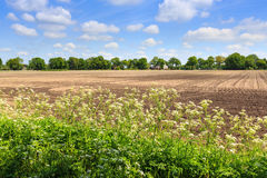 Countryside landscape with weed and cultivated farm field. In Holland royalty free stock image