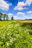Countryside landscape with weed and cultivated farm field. In Holland stock photo