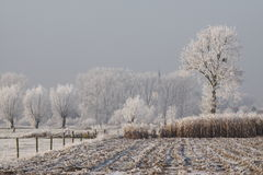Countryside landscape in winter Stock Images