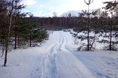 Winter scenery Stock Images